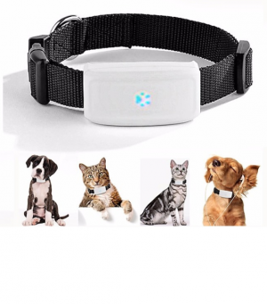 Special product - Collar GPS con localizador